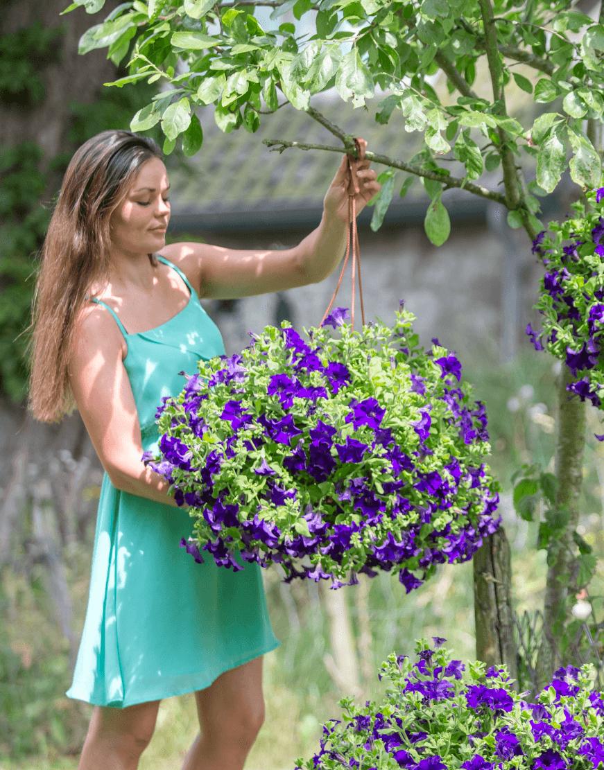 SURFINIA® Velvet Blue | Colors your city